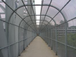 Fence Tunnel by HarvestmanMan