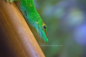 Day Gecko by MorrighanGW