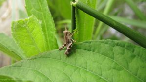 Move On by TheMarchStudios