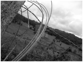 barbed wire by Diamond-Tears