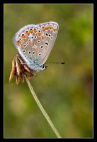 Take a breath and fly away by Bruinen