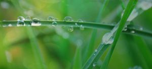 Droplets of Clear by Ellie-S