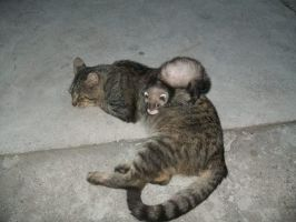 Ferret Friki and Cat Macak :) by Milica-xD