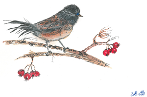BIRD AND REDBERRIES by impalabee