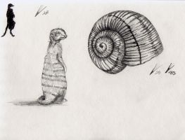 Meerkat and Snail Shell study by Counterdraw