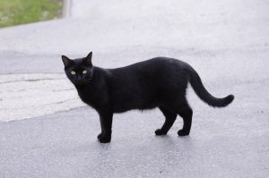 Black cat 15 by Lakela