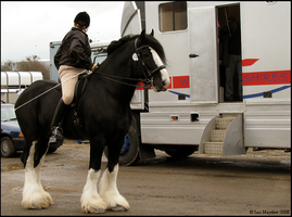 Shire Horse Show: Ridden 17 by ladyepona