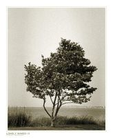 Lonely Wakes III by nighty