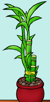 Lucky Bamboo Plant by KittenKagome