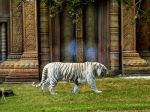White Tiger Temple by SapphirePhoenix