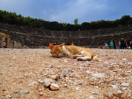Greece -4- : Cat at Epidaurus by IoannisCleary