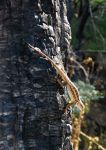 Lizard at Griffith Park by JavanDrakar