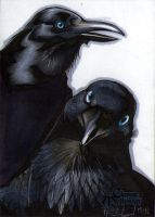 Huginn and Muninn Classic Mythology Sketch Card by RichardCox