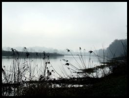 Fog and River by Pedalis