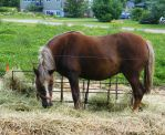 Animals - Horse 02 by Aimelle-Stock