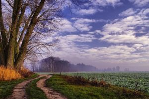 Morning Field by Justine1985
