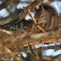 Chowing Down by Brian-B-Photography