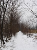 winter path_2 by kingnilo