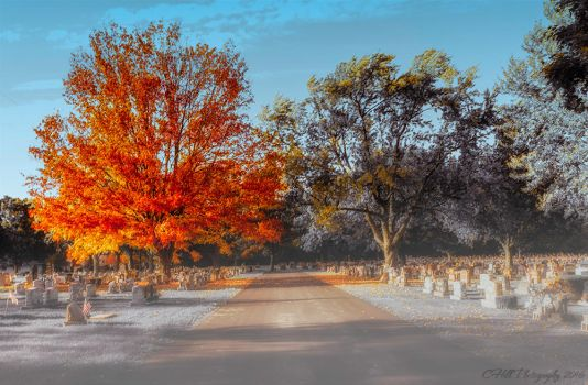 Fall tree at the cemetery by tina1138