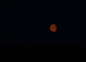 Red Moon by ReimaHowaido