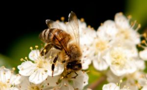 Bee my Honey by dadian