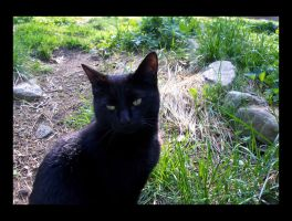 Kitty in the Garden I by AvrilDC
