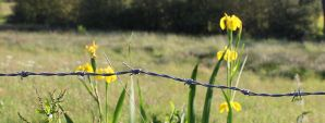 Flowers on the Razor Wire by Aderes-Devorah