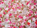 Pink Floral Texture by nopromises-stock
