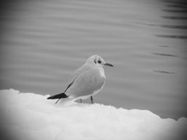 lonely seagull by vxside