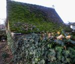 Old mossy roof and ivy by HermitCrabStock