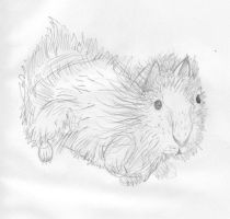 Guinea Pig by Toast-Crumb