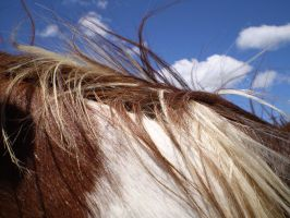 horse mane closeup by greenleaf-stock