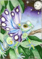 Butterfly Frog1 by StaceyQuay