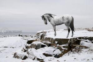 Snowy Andalusian by Cadet-Krauser
