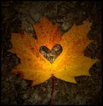 I heart autumn. by Guidalicious