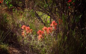 Paintbrush in the Forest ws by norif