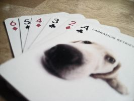 The Dog cards by spectart28
