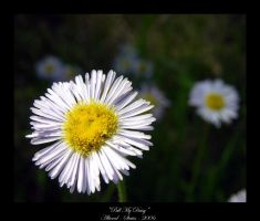 Pull My Daisy by altered-states
