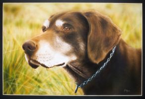 Dog Portrait by MGee-AD