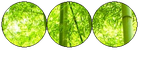 {F2U} Bamboo Forest Resource by Pamb00