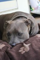 Louis the Pitty by Houndoomlover1