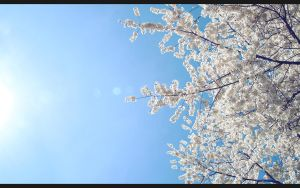 WS Wall- Sweet, Sweet Spring by beanhugger