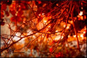 Red by tspargo-photography