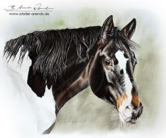 Pinto Mare SP by AtelierArends