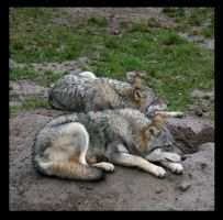 Wolves by Empa85