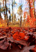 red autumn by Himmelsfalter