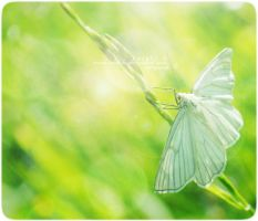 Butterfly Vintage 2 by Schn3e