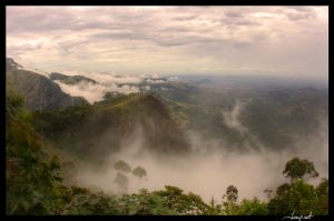 Tea country in the clouds by janapka