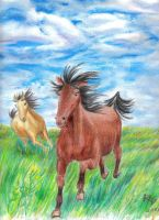 Horses by Prismacolorists