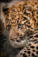 Leopard cub 9 by brijome